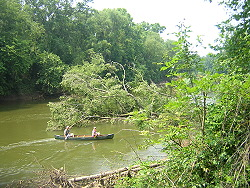 Big trees have fallen in the river close to the take-out