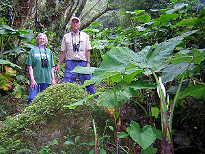 Thomas and Doris Wilson in the Giant Arum Valley of Costa Rica
