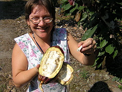 Therese White of CATIE with cacao fruit