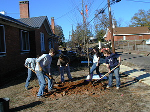 Judson College Earth Team planting a Trident Maple tree