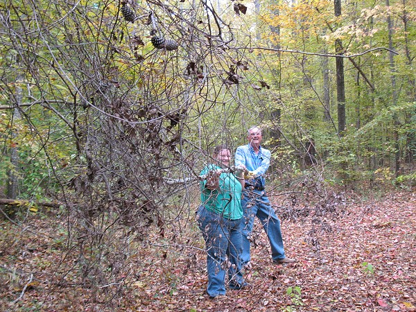 Dr. Wilson and Sylvia Pitts removing vines from trail